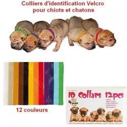 Collier identification Velcro pour chiots et chatons